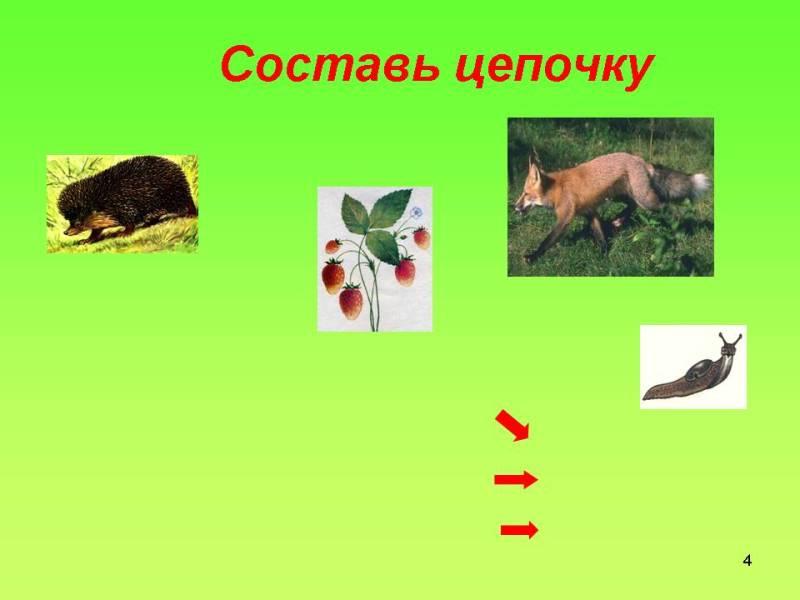 Урок 2 лес как природное сообщество 2
